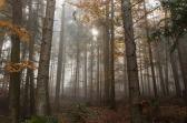 autumn-1127616_640